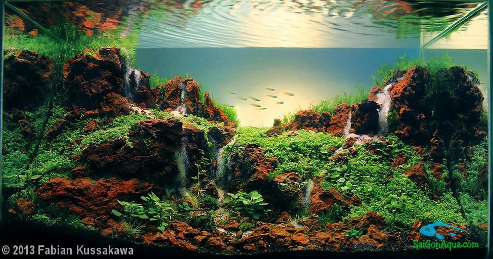 2013 AGA Aquascaping contest – 28L ~ 60L