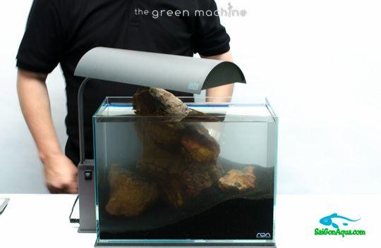 cách làm hồ thủy sinh mini (12)