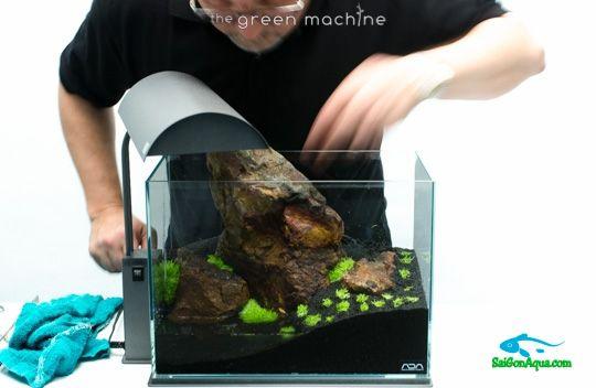 cách làm hồ thủy sinh mini (14)