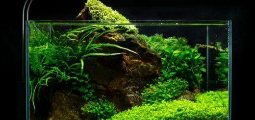 cách làm hồ thủy sinh mini (16)