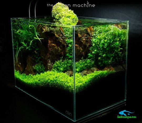 cách làm hồ thủy sinh mini (24)