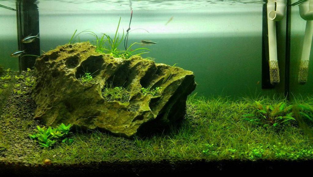 hồ thủy sinh choivoi