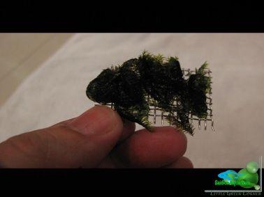 cột rêu thủy sinh_14 (1)