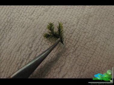Cách cột rêu thủy sinh_15 (1)