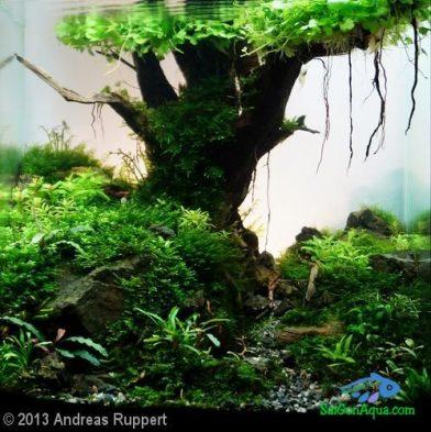 Entry #10 18L Aquatic Garden Hello old Quercus