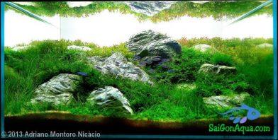 Entry #132 56L Aquatic Garden Utopia