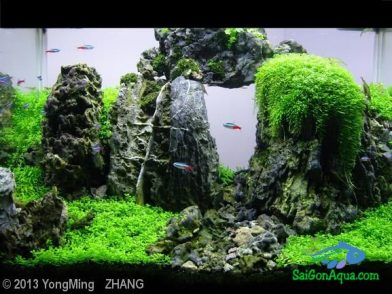 hồ thủy sinh mini