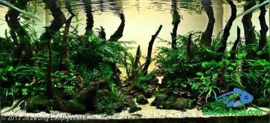 Entry #168 110L Aquatic Garden Home