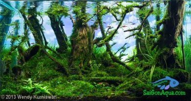 Entry #191 45L Aquatic Garden Deep Green Forest