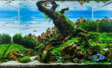 Entry #193 22L Aquatic Garden When Winter has Come to an End