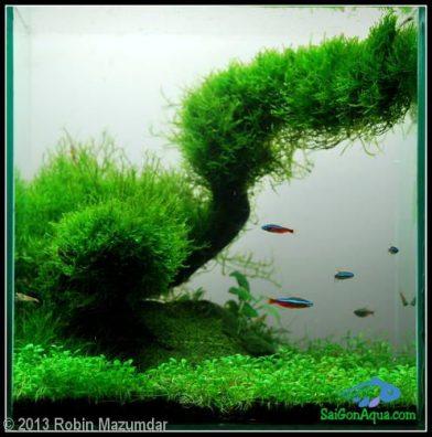 Entry #215 14L Aquatic Garden The Green Curve