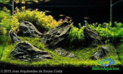 Entry #22 96L Aquatic Garden Peace