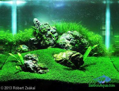 Entry #222 26L Aquatic Garde Deck Nano's