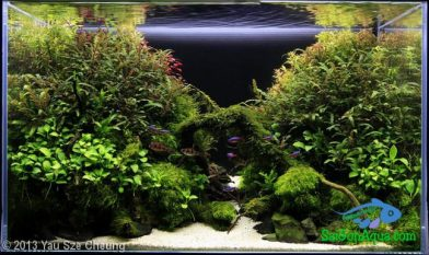 Entry #240 80L Aquatic Garden 穿梭之間