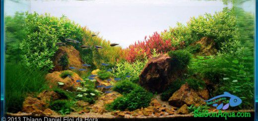Entry #253 56L Aquatic Garden Amanhacer da Primavera