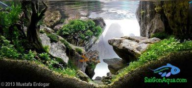 Entry #279 105L Aquatic Garden The Crag
