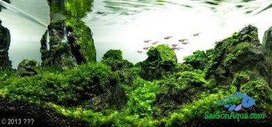 Entry #318 36L Aquatic Garden 秘境