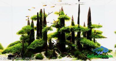 Entry #320 65L Aquatic Garden Yose-ue Bonsai