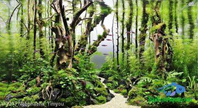 Entry #333 64L Aquatic Garden Amazing Green Tree