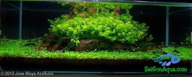 Entry #341 17L Aquatic Garden ILLA