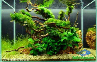 Entry #359 20L Aquatic Garden Perpetual Nature