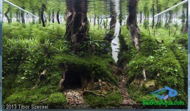 Entry #366 117L Aquatic Garden Forest Lair