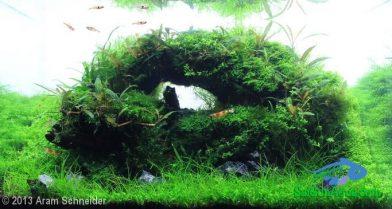 Entry #37 25L Aquatic Garden Alice in wonderland