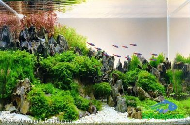 Entry #375 21L Aquatic Garden Tianmu Mountain Ascended In A Dream