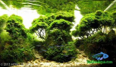 Entry #377 20L Aquatic Garden 皓翰林溪