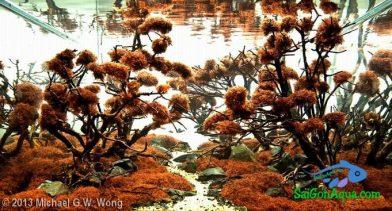 Entry #382 96L Aquatic Garden Autumn Blaze
