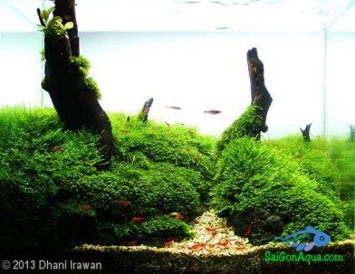 Entry #390 15L Aquatic Garden Little Green Forest