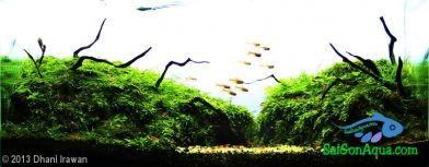 Entry #394 15L Aquatic Garden Weeping Land