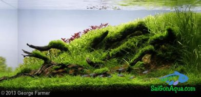 Entry #40 81L Aquatic Garden Rooted in Nature