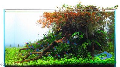Entry #408 64L Aquatic Garden Autumn