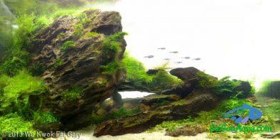 Entry #469 40L Aquatic Garden Day Spring