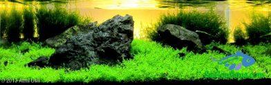 Entry #543 19L Aquatic Garden Lembah Hijau Batu Besaung