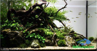 Entry #591 58L Aquatic Garden Roots & Rocks story