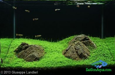 Entry #598 37L Aquatic Garden Dune rosse