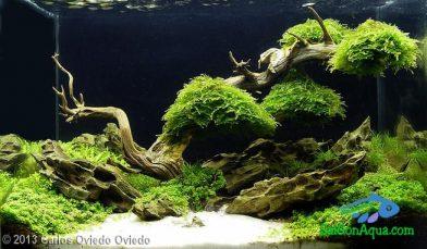 Entry #601 26L Aquatic Garden Aquatic tree