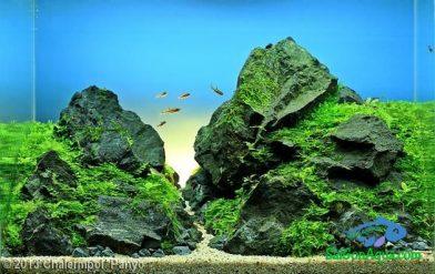 Entry #613 22L Aquatic Garden Mountain of Life