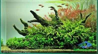 cách làm hồ cá thủy sinh