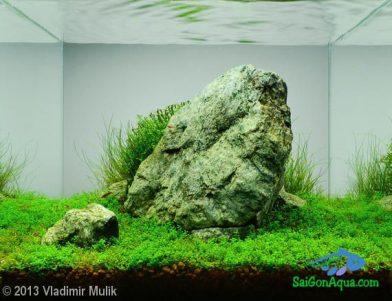 Entry #629 13L Aquatic Garden imo