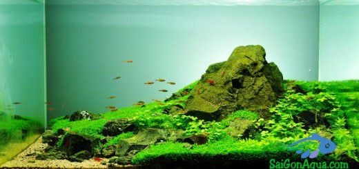 hồ thủy sinh đẹp