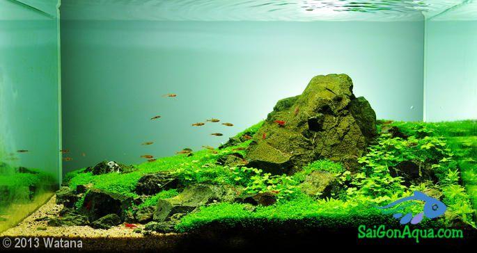 Hồ thủy sinh để bàn đẹp