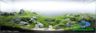 210L Aquatic Garden Reborn