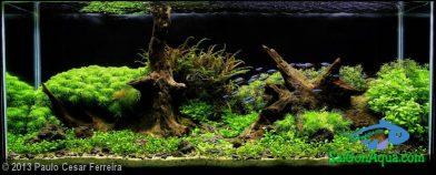 240L Aquatic Garden