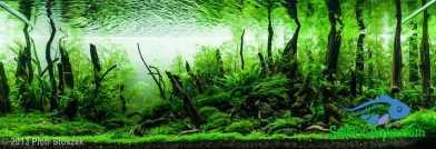 243L Aquatic Garden A drowned forest