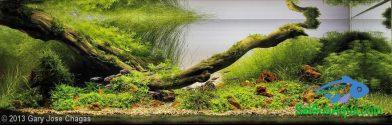 300L Aquatic Garden Rio sucuri