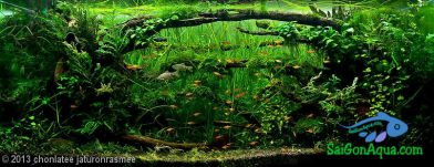 315L Aquatic Garden Tunnels in the wood
