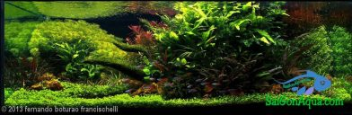324L Aquatic Garden Ganbatte of Dreams